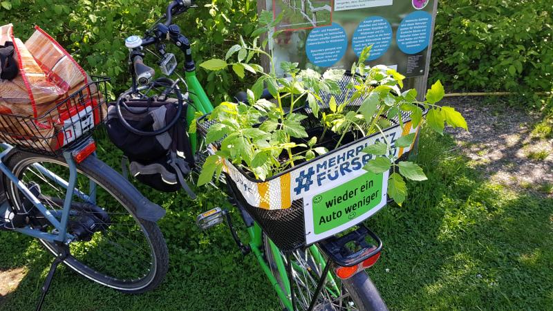 Jungpflanzen im Fahrradkorb