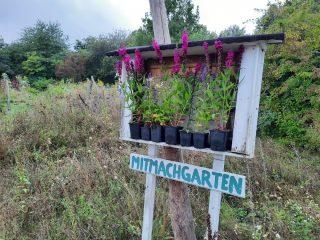 Das Gartenjahr 2021 ist noch lange nicht vorbei, aber die Hauptsaison neigt sich dem Ende. Da wird auch bei uns immer wieder die Frage laut, ob freigeräumte Beete leer bleiben oder noch etwas in die Erde gebracht werden kann.   Inzwischen sind wir uns alle einig, auch der Herbst bietet tolle Chancen. Kräuter können wunderbar im September und Oktober gepflanzt werden. Der feuchte Boden bis zum Winter ermöglicht es den Pflanzen, sich ordentlich zu verwurzeln. Mit neuer Energie können sie direkt im Frühjahr mit dem Wachstum beginnen.   Auch Gründüngung können wir empfehlen. Spinat oder Senf schützt den Boden vor Erosion und kann im Frühjahr einfach untergehackt werden.   Radieschen, Spinat und Feldsalat können noch wunderbar ausgesät werden. Und natürlich wachsen die wunderbaren Kohlpflanzen noch weit in den Herbst hinein :).