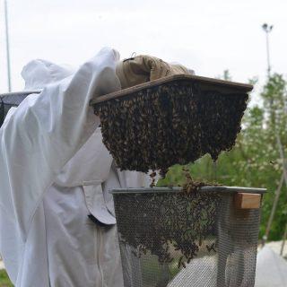 """Vor ein paar Wochen haben wir mit Hilfe eines Projekts unter anderem zwei neue Bienenvölker erhalten. Hier seht ihr Julia wie sie dem Volk hilft in ihr neues zu Hause """"einzulaufen"""". 😊😊😊 Kommt vorbei und schaut sie euch an! 😀  #schreberjugendniedersachsen #bingoumweltstiftung #urbangardening #bienengarten"""