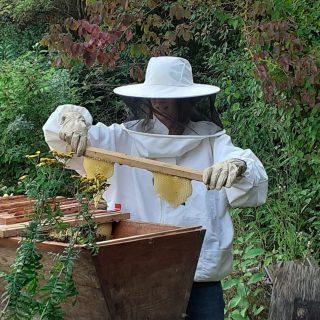 """Julia und ich haben heute ein bisschen """"geräubert"""". Nachdem Julia das Innere der Bienenbeute in Augenschein genommen hat, um zu gucken ob es dem Volk gut geht, ist ein bisschen Honig für uns abgefallen. Yummy.😁😁😁  #mitmachgarten #schrebby #honigbiene"""