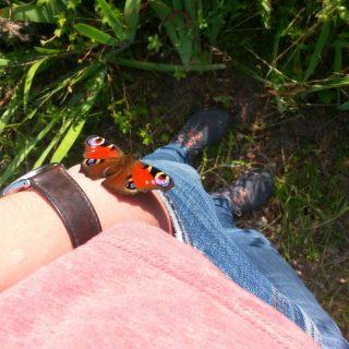 Im Mitmachgarten ist Natur wirklich fühlbar 😲 😁. Heute landete ein Schmetterling ganz unbekümmert auf meinem Arm und hat sich gesonnt. Ich konnte seine Bewegungen und sein geringes Gewicht spüren. Einfach phänomenal!   Das scheint ein gutes Omen zu sein für unsere Veranstaltung in einer Woche. Wir werden am 8.8. ab 14 Uhr über Nutzungskonzepte von Böden sprechen. Wie gut funktioniert ein Gemeinschaftsgut (Allmende), wo sind die Grenzen und welche positiven Erfahrungen aus aller Welt gibt ist? Der Eintritt ist frei, die Veranstaltung findet draußen statt und Neugierige sind herzlich willkommen. #Schrebby #Urbangardening #Mitmachgarten #Allmende