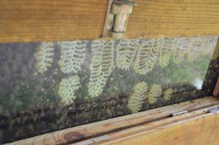 """Das Projekt """"was summt denn da?"""" ist fast vorbei, aber der Grundstock für weitere summende Jahre ist gelegt :). Mehrjährige Kräuter umrahmen die Beete des Mitmachgartens, zwei Bienenvölker sind angesiedelt und unsere Motivation ist groß, weiterhin diese Flächen mit Liebe zu pflegen. #wassummtdennda #Schrebby #mitmachgarten #bingoumweltstiftung"""